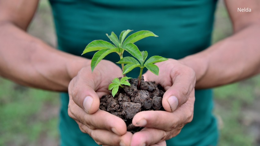 5 Notable Tree Plantation NGOs in India
