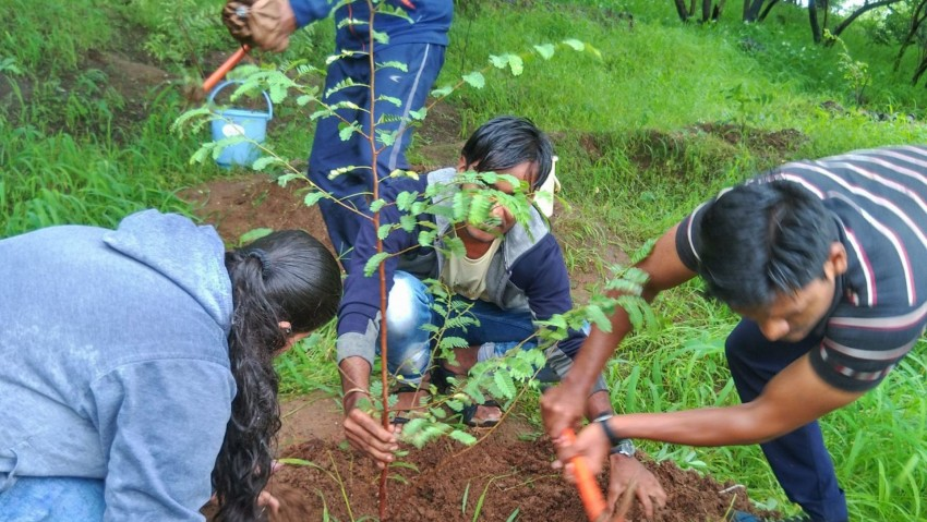 9 Trees Excellent for Your Tree Plantation Drive i