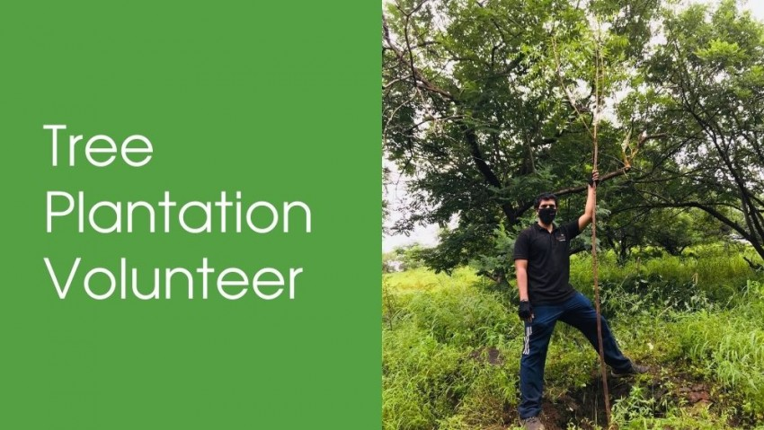 Become a Tree Plantation Volunteer with Nelda