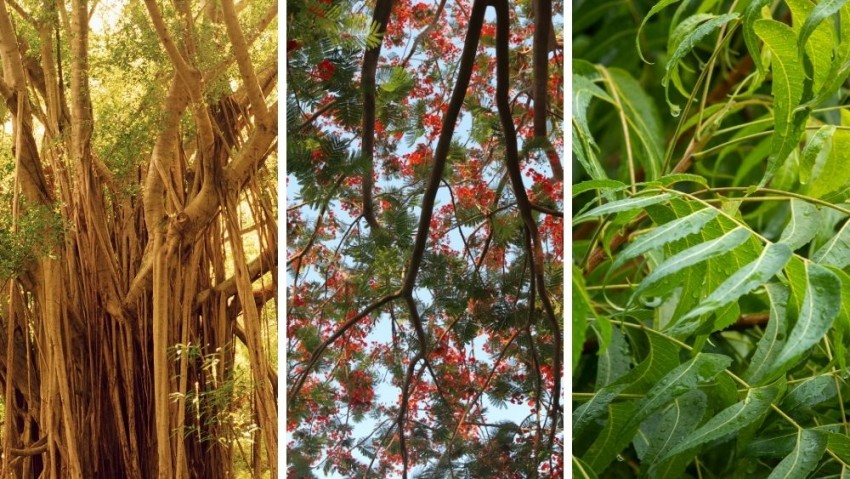 40 Common Trees in India - Uses, Benefits of Trees